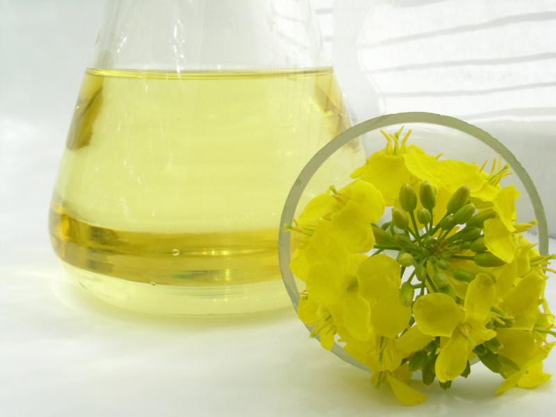 Рапсовое масло: польза и вред