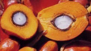 Пальмоядровое масло: польза и вред
