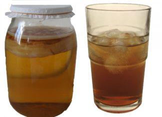Чайный гриб: полезные свойства и противопоказания