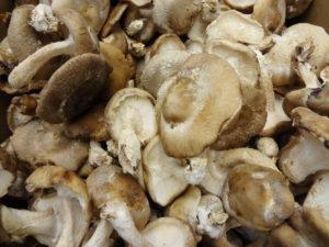 грибы шиитаке: вред