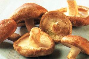 грибы шиитаке: польза