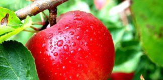 Яблоко: польза и вред, калорийность