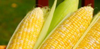 Кукуруза польза и вред калорийность