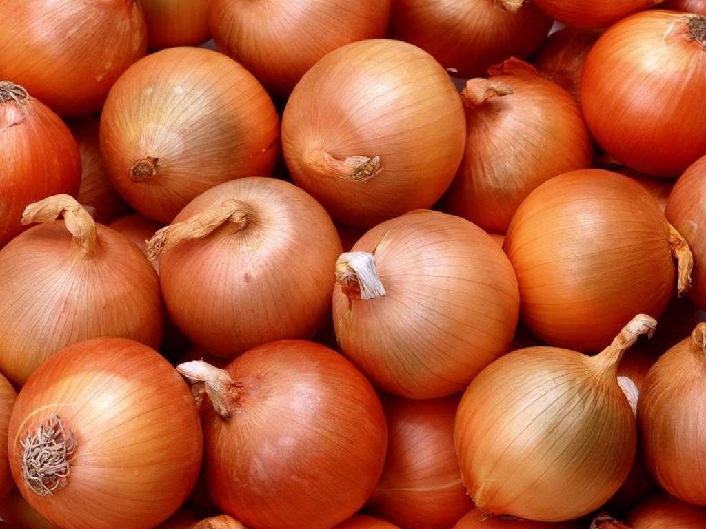 Репчатый лук: польза и вред, калорийность, способы приготовления