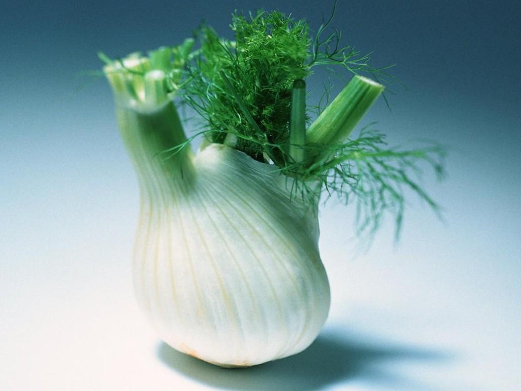 Фенхель: польза и вред, калорийность