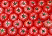 много помидоров