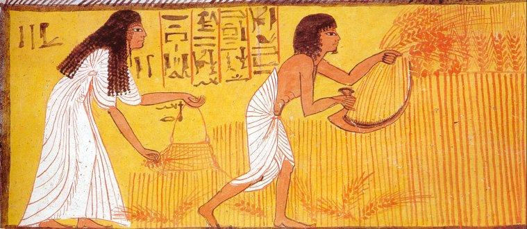 хлеб в Египте