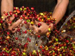 зерна кофе моют