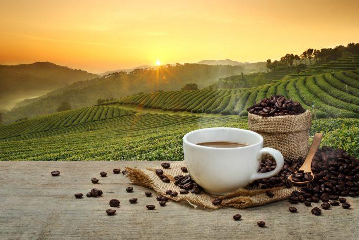 Плантации кофе