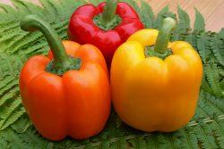 Болгарский перец: польза и вред, калорийность