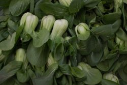 Китайская капуста: польза и вред, калорийность