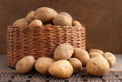 Картофель: польза и вред, калорийность, способы приготовления