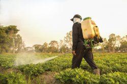 Заражение продуктов пестицидами. Как выбрать безопасную еду