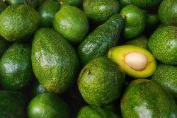 Авокадо: польза и вред, применение