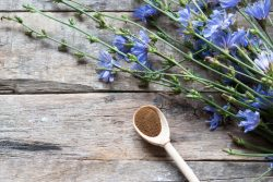 Цикорий растворимый порошкообразный: польза и вред